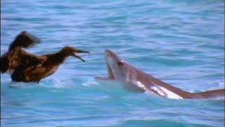 Scavengers of the Seas - Documentary