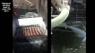 Wanapum Dam Fish Ladder Modifications