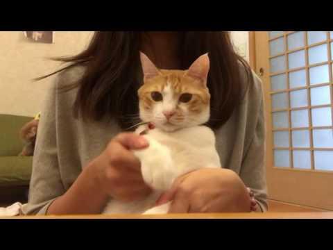 猫たちが恋愛レボリューション21updated踊ってみた*