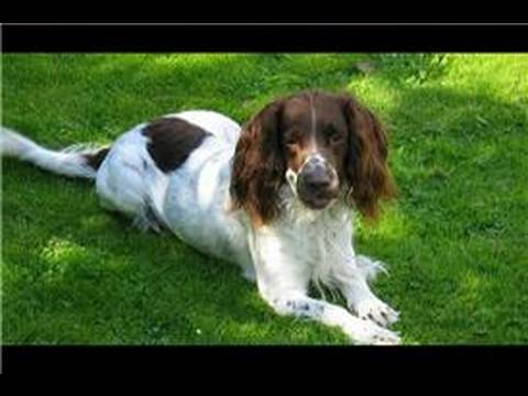 dog grooming tutorial video