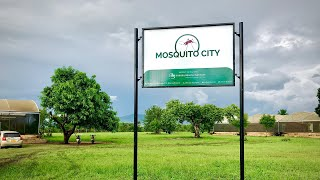 Welcome to Mosquito City!