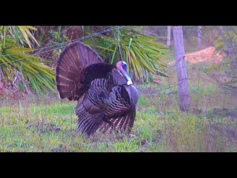 Wild Turkey {Catch Clean Cook} Opening Day Success!