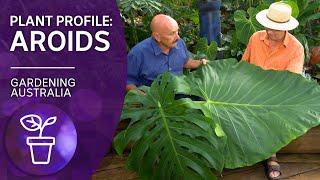 Addicted to Aroids   Plant profile   Gardening Australia