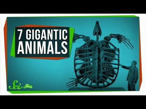 The Biggest Sloth That Ever Lived, and 6 Other Gigantic Animals