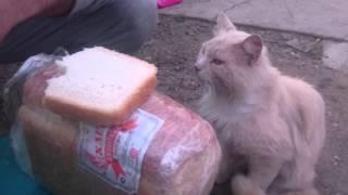 Вот как нужно воспитывать кошку...!!!