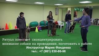 Дрессировка собак в группе на ПП