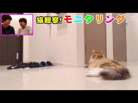 【猫観察】モニタリング 飼主のいない間なにしてる?