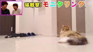 【猫観察】モニタリング 飼主のいない間なにしてる?...