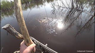 Ловим огромных карасей пауком подьемником на мосту из живых деревьев 4К