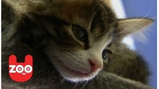 Kittens At Battersea Dogs And Cats Home