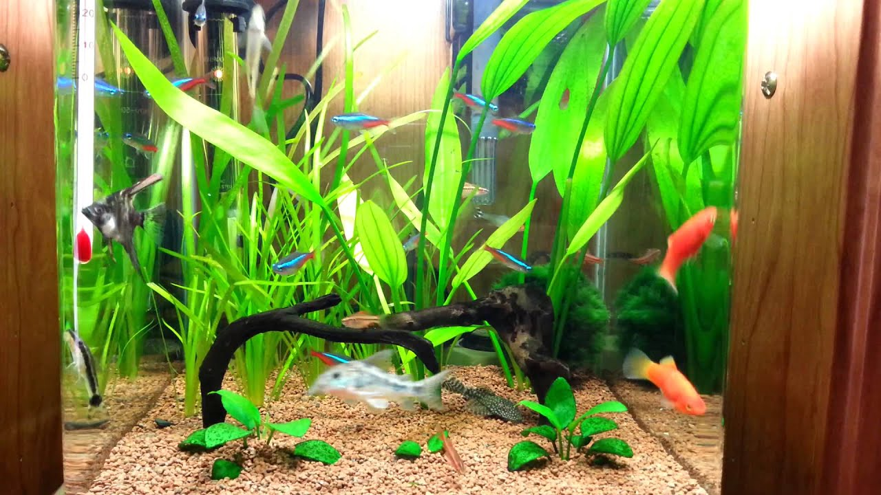 Nano acuario 20l plantado youtube for Red para peces de acuario