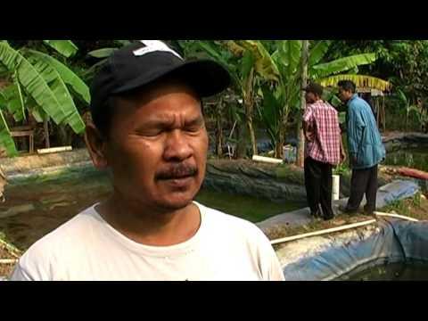 Wirausaha Budidaya Ikan Air Tawar