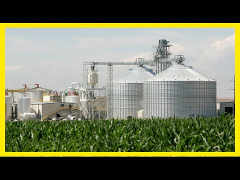 Breaking News | Nsdc wants implementation of 10% ethanol blend in petrol
