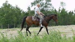 Belle - Standardbred Mare - Riding