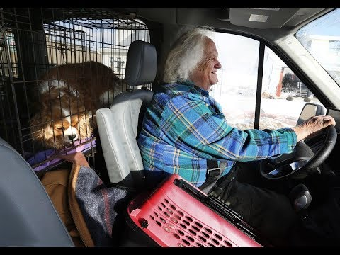Commercial breeders dump dogs amid Ohio's new 'puppy mill' rules