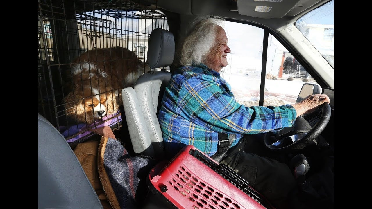 Commercial breeders dump dogs amid Ohio's new 'puppy mill