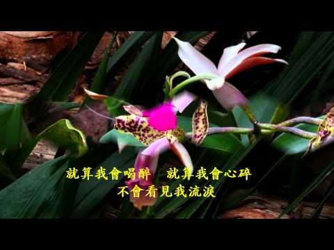 音樂磁場- 忘情水, 蝴蝶蘭