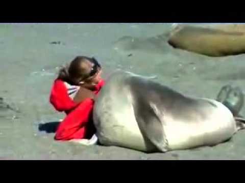 Seal meets girl.  Seal falls in love with girl.  The end.
