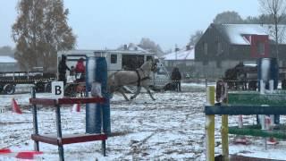 Hubertus 2012 - Stajnia Palamo - zawody zaprzęgowe
