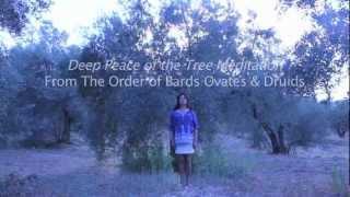 A DRUID TREE MEDITATION