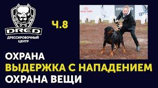 Тренировка собак для охраны Выдержка с нападением Охрана вещи Охрана машины