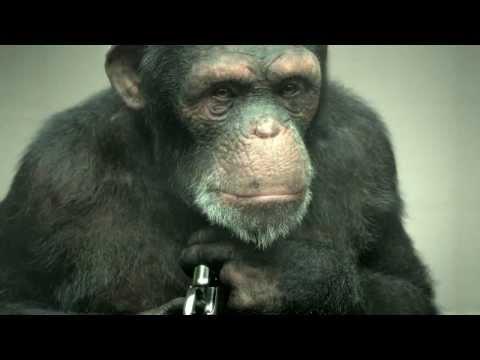 "Developing a 100% CGI Chimp for PETA's ""98% Human"""