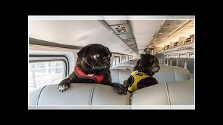 ✫Pups Onboard: Why Trains Are a Great Way to Travel With Your Dog(s)