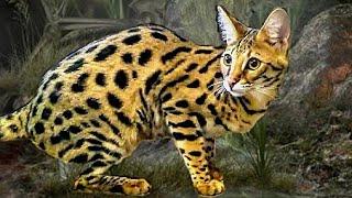 "☣️ WARNING !! Savannah Cats - ""Vital Information !"""