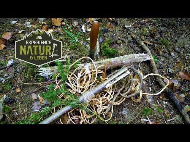 Fichtenwurzeln als Naturschnur - ernten, vorbereiten und schälen -Stabile Naturschnüre