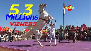 vuclip Horse Dance Competition at Pushkar Cattele Fair 2017(Full Video)