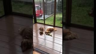怠惰なクッキー&マロン thumbnail