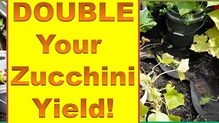 How to Get a Second Crop of Zucchini Late Season - Double Your Zucchini (Courgette) Yield