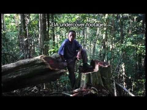 Madagascar - A State of Denial . Charlie Kinross HD cameraman.