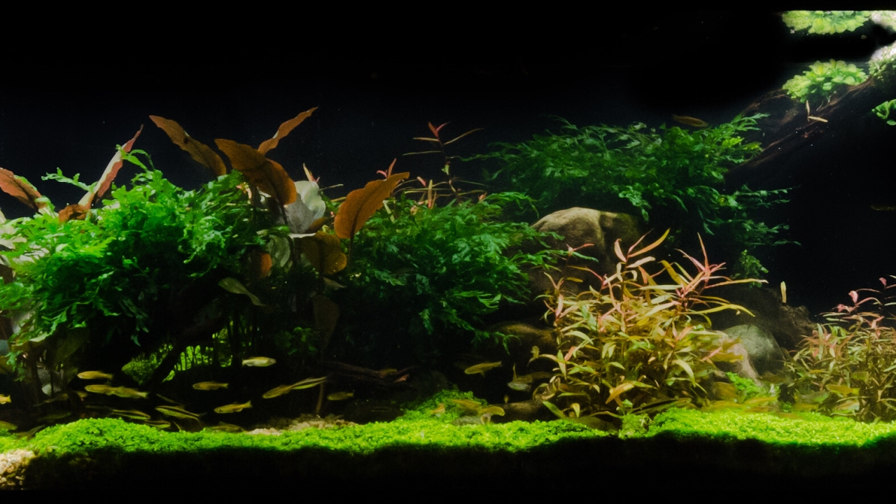 Takashi Amano Tribute Aquascape by James Findley