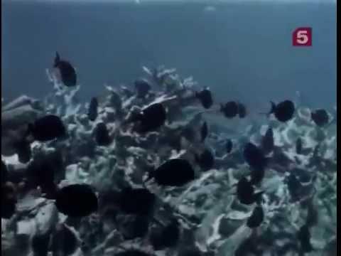 Подводные поиски сокровищ видео восточные дирхемы