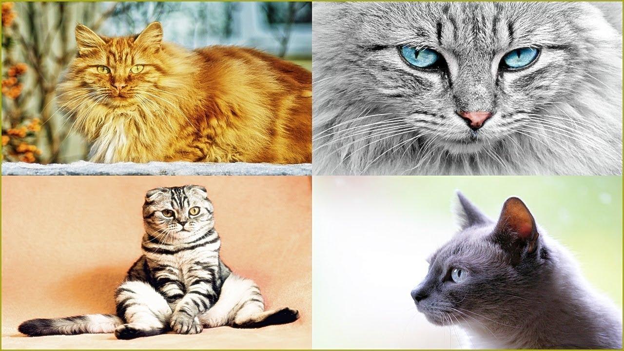 Unduh 98+  Gambar Kucing Lucu Banyak Paling Baru HD