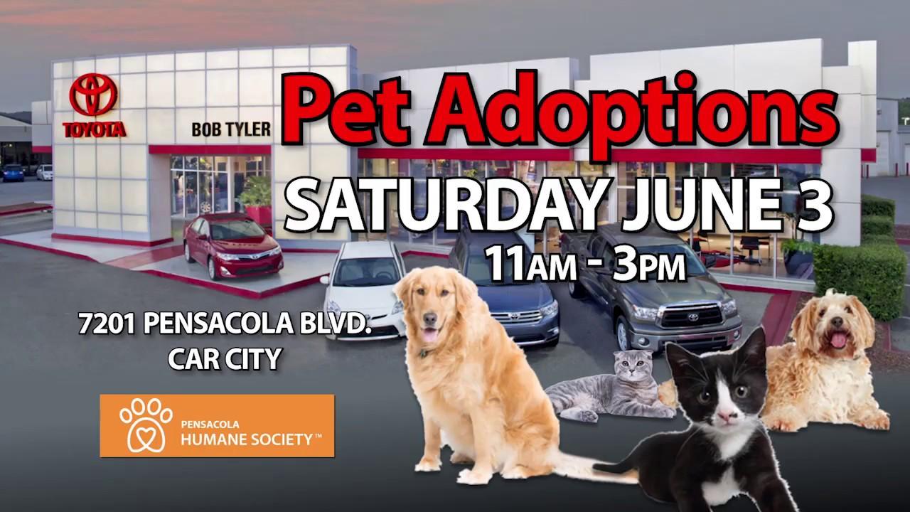 Pet Adoption Day   Bob Tyler Toyota In Pensacola   Near Daphne
