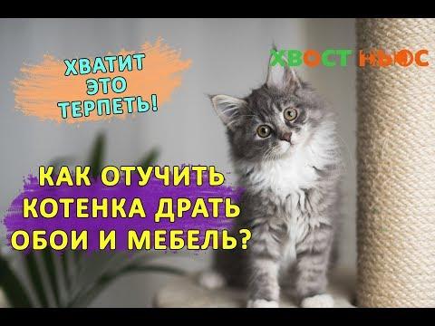 Вопрос: Как научить кота драть когтями не диван а кошачью дранку?