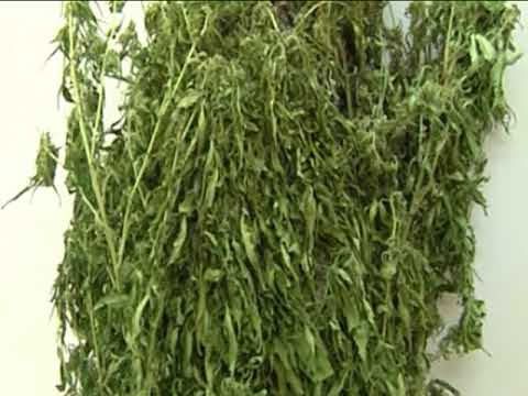 Заправить марихуану нашли марихуану в моче