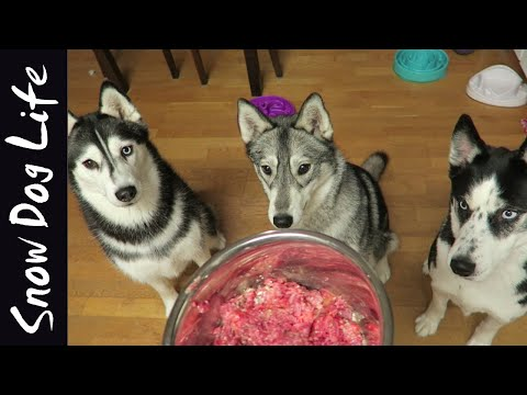 What feeding raw to my huskies look like!