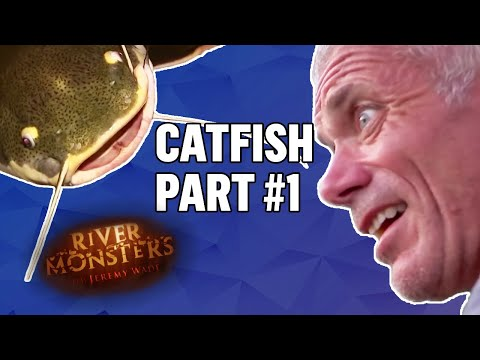 Best Of Catfish! #1 | COMPILATION | River Monsters