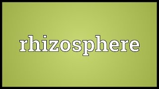 Rhizosphere Meaning