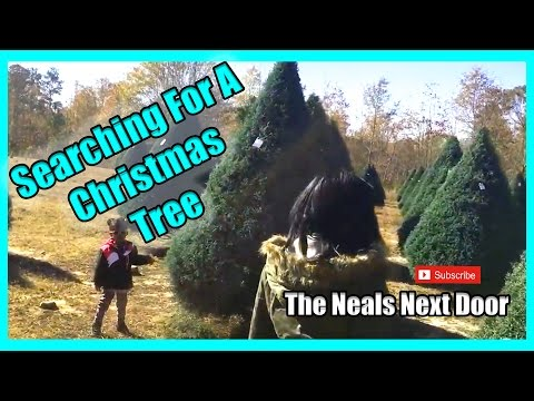 Searching For A Christmas Tree