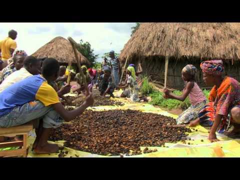 GERES - Local and sustainable bio-fuels pattern, Benin / Webdoc Africa Express