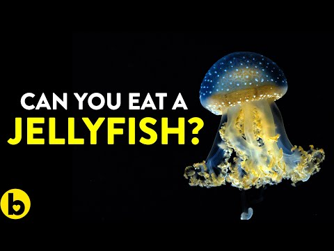 Eating Jellyfish Would Do This To Your Body