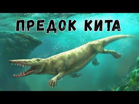 Невероятные Предки Китов