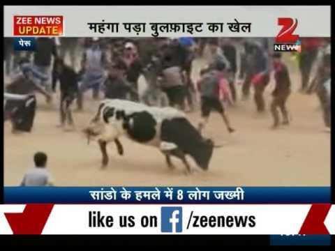 Bull Fighting Festival in Peru