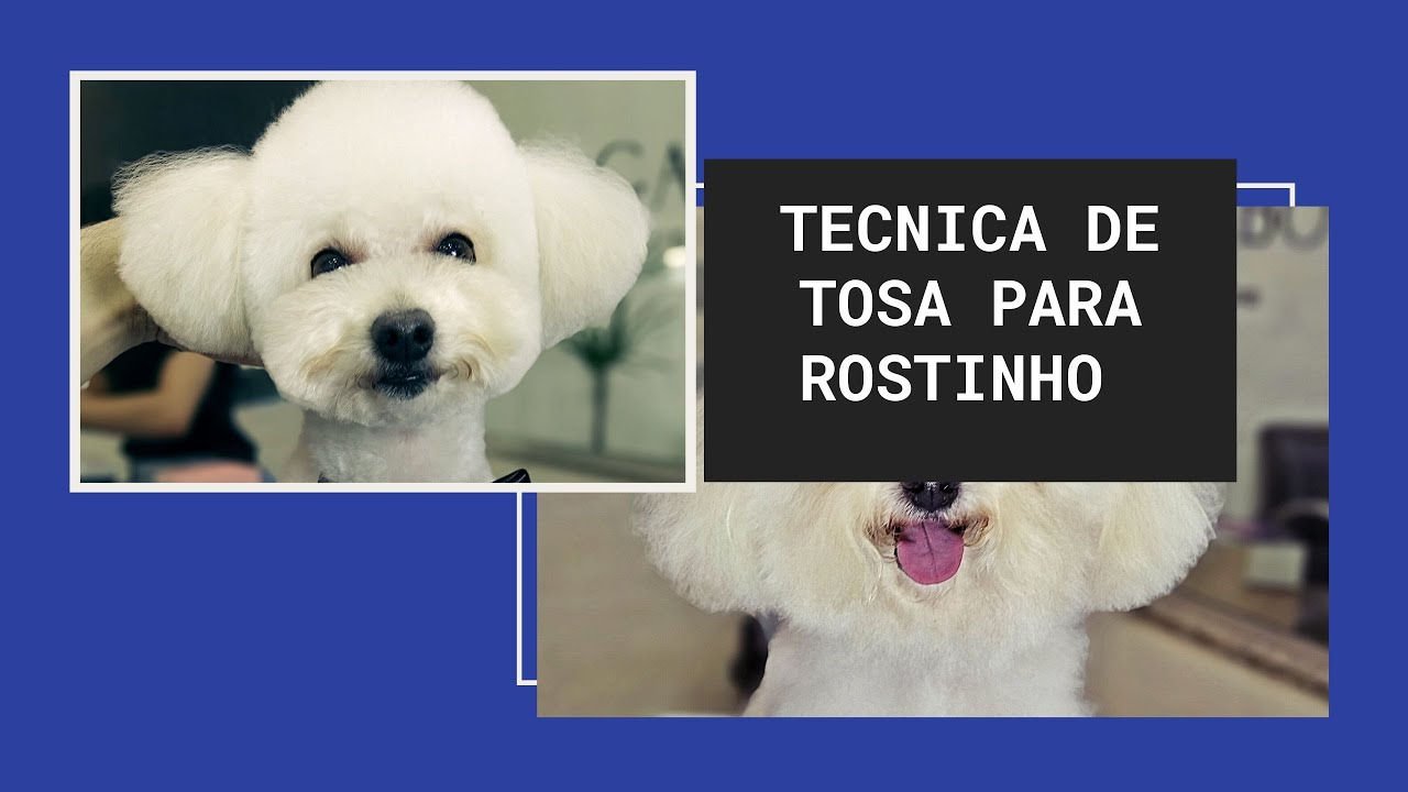 AULA N° 18: Técnica de tosa em rostinho de poodle