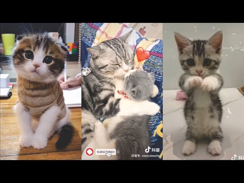Kittens Cute and Funny Tik Tok Videos Compilation 2020 #3