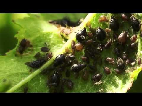 Unbekannte Welten   Der Mikrokosmos der Spinnen und Insekten 2 3   Dokumentation Deutsch HD